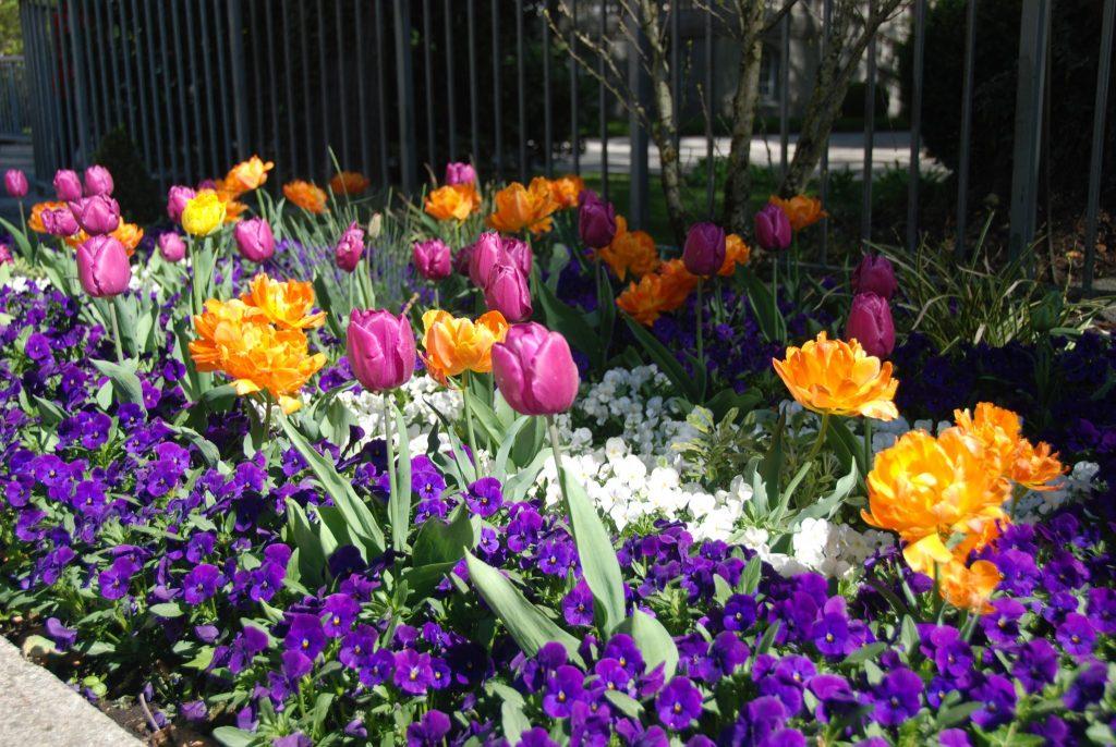 Frühlingsblumen in der Fußgängerzone