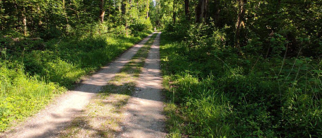 Radweg durch Auenlandschaft